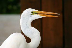 Everglades Miami